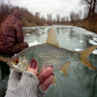 Ловля плотву по последнему льду