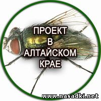 Производство опарыша в Алтайском крае