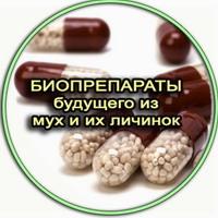меланин, хитозан - уникальные биополимеры из мух