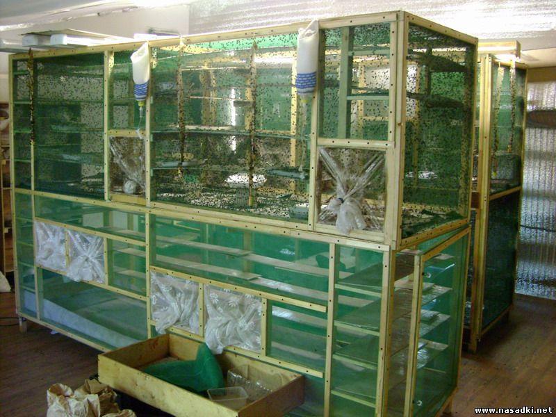 Клетки для мух на производстве опарыша в Белгороде 2012 год