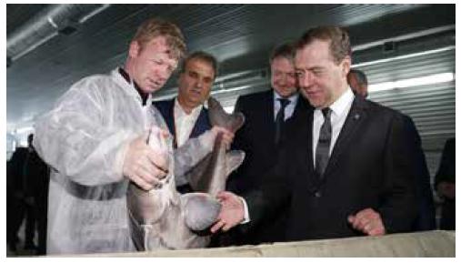 Дмитрий Медведев на осетровом заводе в Саратове