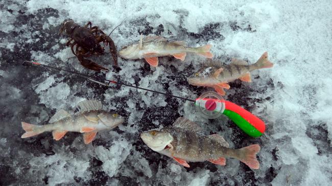 ловля окуня в середине зимы
