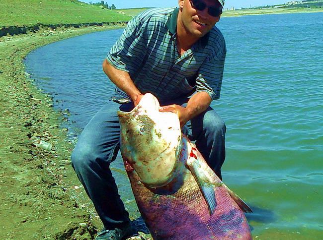 рыбалка на толстолоба