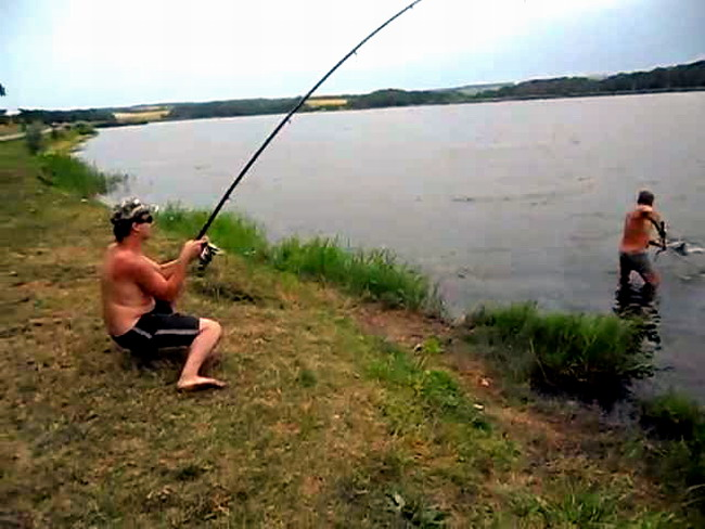 видео ловля толстолоба на кашу