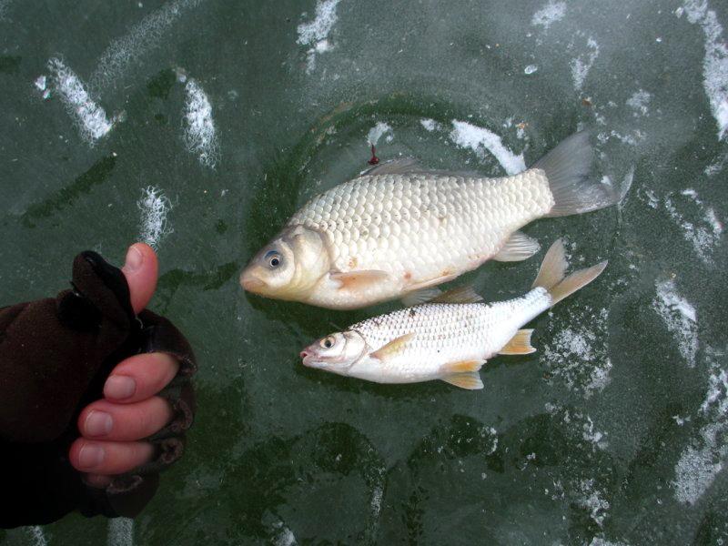 цимлянский рыболовный форум