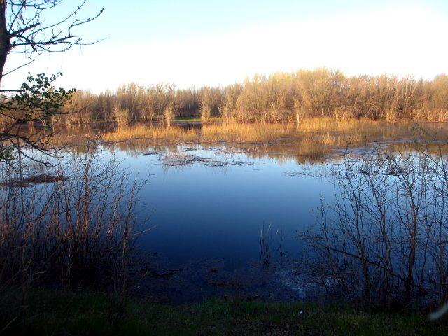Плотвиное озеро