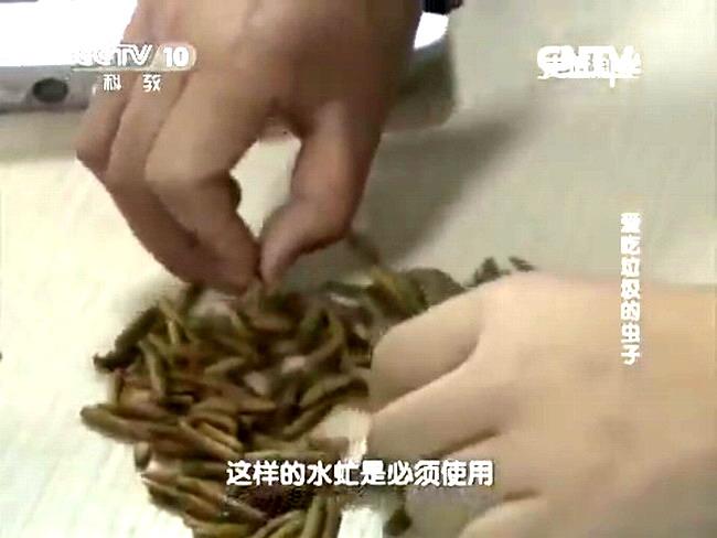 чипсы из опарыша