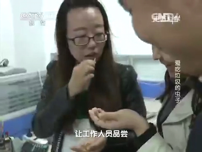 Китайцы едят опарыша в качестве деликатеса