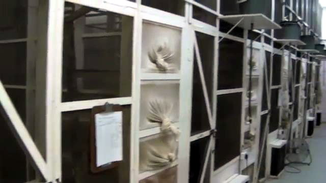 мухи в клетке