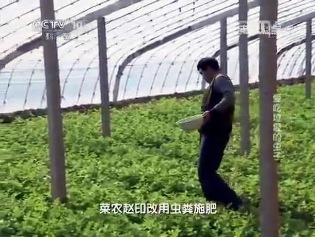 экологически чистое выращивание овощей