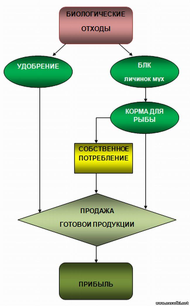 Производство кормов для рыбы из опарыша